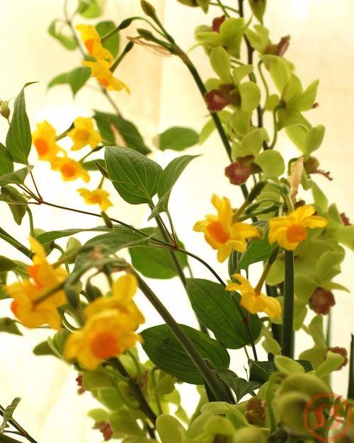 ブラナジェードと黄房スイセン アレンジ1
