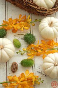 白かぼちゃ2