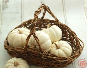 白かぼちゃ1
