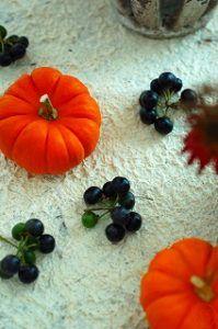 かぼちゃとソラナムハックルベリー